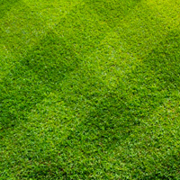 Lawn Care Dulwich