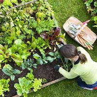 Garden Maintenance Dulwich