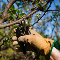 Tree Pruning Dulwich