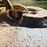 Stump Grinding Dulwich
