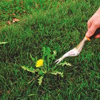 Weeding & Pruning Dulwich